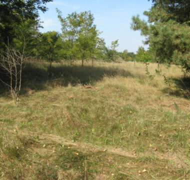 Typical semi-open habitat of <i>D. reticulatus</i>
