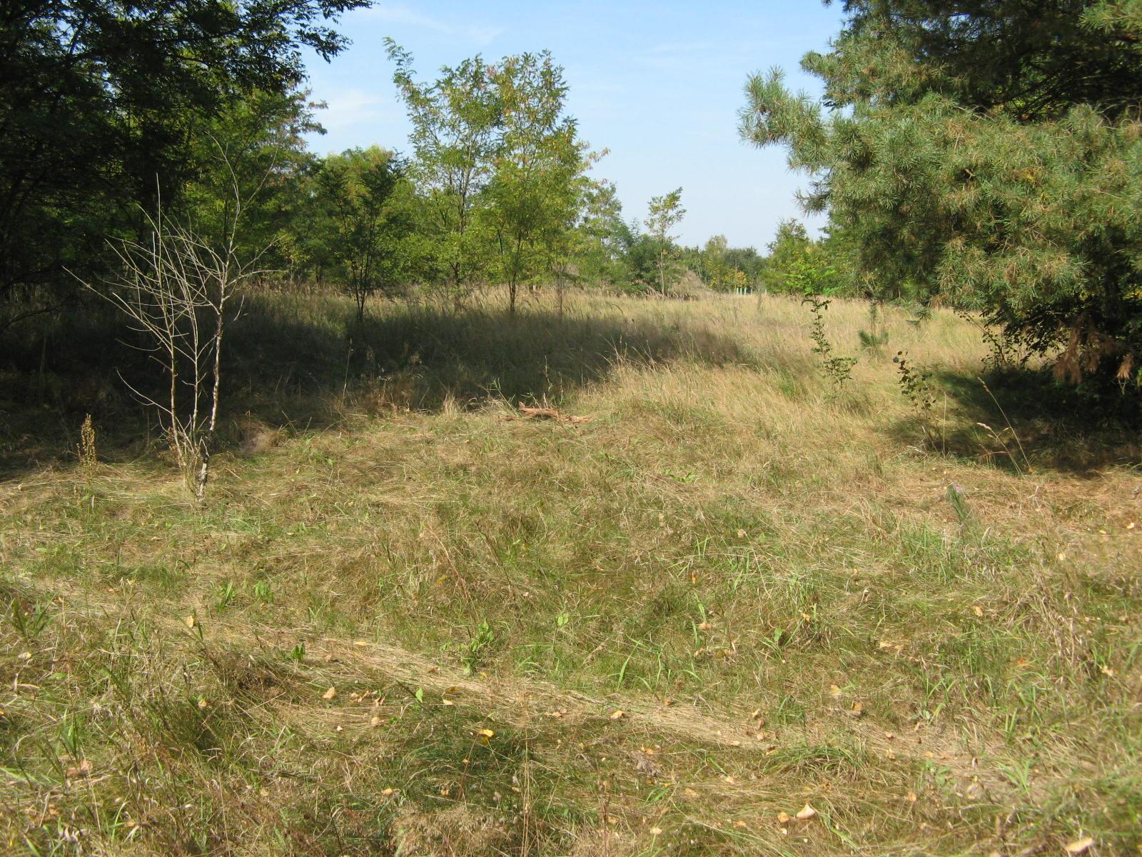 Typical semi-open habitat of <i>D. reticulatus</i>